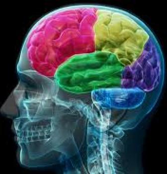 Een hoofd om te denken
